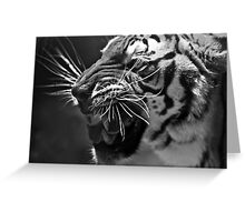 Bengal Tiger in black and white Greeting Card
