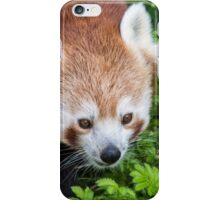 Red Panda close up of face iPhone Case/Skin