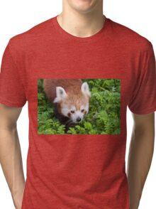 Red Panda close up of face Tri-blend T-Shirt