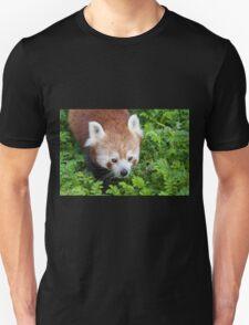 Red Panda close up of face T-Shirt