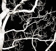 Branching Out  by Thelasthippie