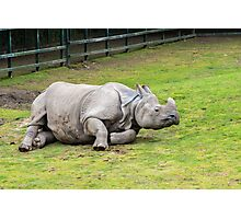 Greater One-horned Rhino Photographic Print