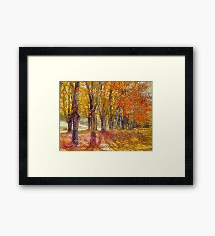 Maple Lane  Framed Print