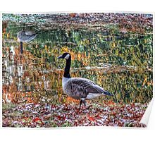 Fall Geese Poster