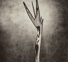 Bird of Paradise by photosmoo
