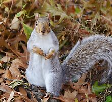 Does that camera distribute nuts? by Georgie Hart