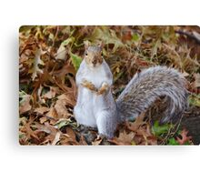 Does that camera distribute nuts? Canvas Print