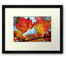 Candy Corn Leaves Framed Print