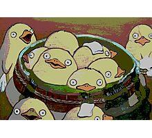 Spirit Ducks? or Chickens? Photographic Print