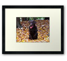 Canadian dogs in Canadian leaves Framed Print