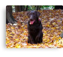 Canadian dogs in Canadian leaves Canvas Print