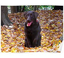 Canadian dogs in Canadian leaves Poster