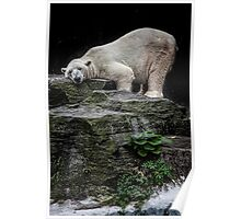 The Contented Bear Poster