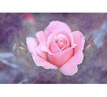 Young Romance Photographic Print
