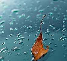 leaf on wet glass by Stephanie Aughenbaugh