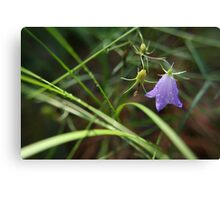 Bluebell in Tall Grass Canvas Print