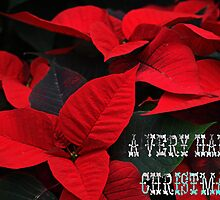 Poinsettia-Christmas Card by naturelover