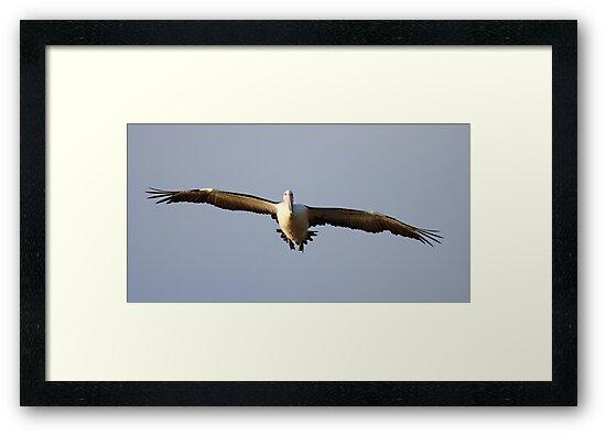 """Pelican Incoming"" by jonxiv"