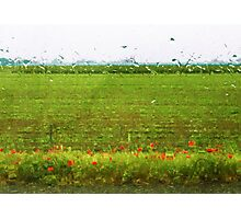 Poppies in The Rain  Photographic Print