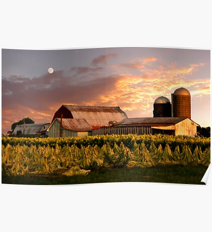 Tobacco Farm Tobacco Field Poster