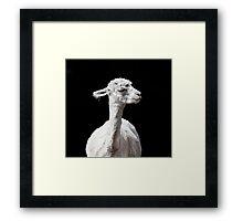 Snooty Alpaca. Framed Print