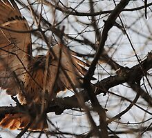 Young Redtail Hawk Hunting: Strike 2 by Thomas Mckibben