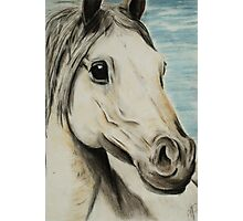 Tinted charcoal horse Photographic Print