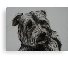Tinted charcoal terrier Canvas Print