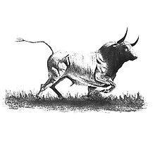 Drawing of Bull by Mario Perez