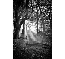 Chevin Forest Park #2 Mono Photographic Print