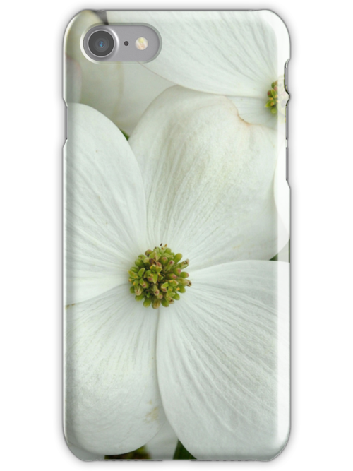 White Dogwood by Colleen Drew