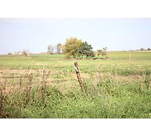 Green Pastures Photographic Print