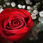Just a Red Rose by Linda Makiej