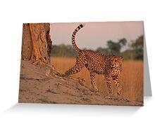 Feline beauty Greeting Card