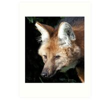 Maned Wolf .. A Fox in disguise  Art Print