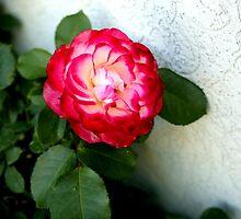 Flower 2 by Epopp300