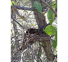 The Lonely Nest Photographic Print