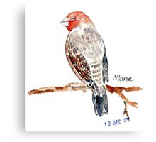 Red-headed Finch (Rooikop Vink) Canvas Print