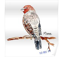 Red-headed Finch (Rooikop Vink) Poster