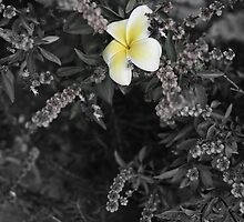 Hawaii Photography Sikspix Inspirational Flower by Tommy Grofcsik
