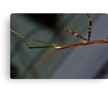 Walking Stick Canvas Print
