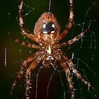 Orb Weaver 1 by William Brennan