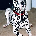 Aston My Awesome Dalmatian by vette