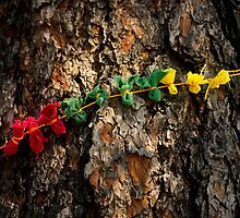 Prayer Cloths on a Tree in Devils Tower National Monument  by Alex Preiss