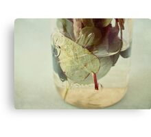 leaves underwater Canvas Print
