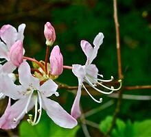 Flowers in Spring by Aaron McKenzie