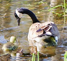 Now Listen to Mama.. This is How you Swim by Heather King