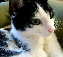 Cambria, California Cats by Diana Cardosi-Bussone
