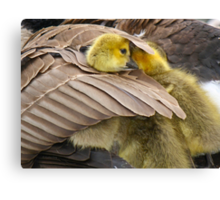 Wake up little brother, its time to play Canvas Print