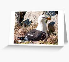 black back gull Greeting Card